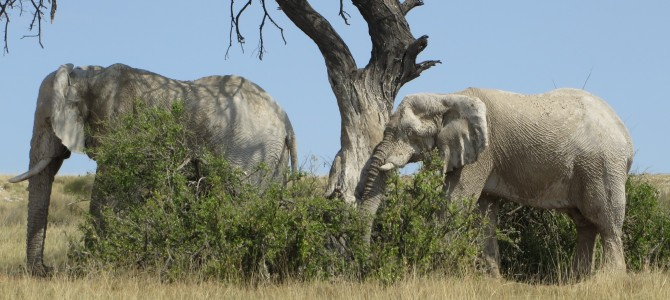 Safari im Etosha-Nationalpark